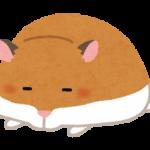 ハムスター冬眠の見分け方?体が固くて動かないときはどうすればいい??