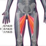 股関節を柔らかくするストレッチ方法!猫背や腰痛にも効果がありますよ!!
