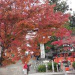嵐山だけじゃない紅葉!桜の名所の奈良吉野で混雑無し、穴場「わびさび」を堪能!!