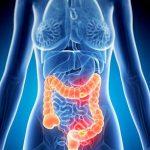 食物繊維(野菜)と大腸がんの関係!常識の背後で変転する研究とは?