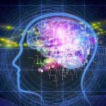 ニューロンとシナプス!人間は72歳になっても脳細胞は増加するって?